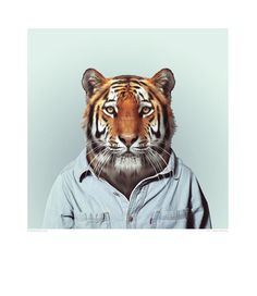 Zoo Portrait - Tiger | DEVOTEDTO home to many Great British Design brands including GPlan Vintage and many more