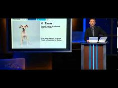 Italian Greyhound Taser - Animal Planet Puppy Bowl X - Comedy Central - ROMP Rescue