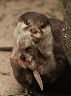 Otter holding her baby. I LOVE THIS