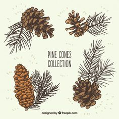 Hand drawn pine cones collection Free Vector