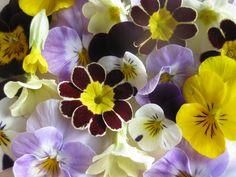 Edible Flowers, £9.00