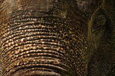 Elephant Eye - photograph by Stuart Litoff 1-stuart-litoff.artistwebsites.com