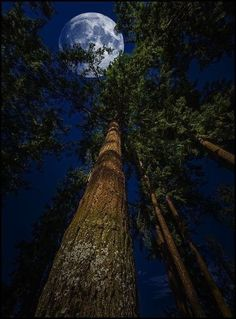 Laying on my back and looking up through the tree to view the beautiful moon. Beautiful Moon, Beautiful Places, Beautiful Pictures, Amazing Places, Ciel Nocturne, Shoot The Moon, Moon Art, Night Skies, Nature Photography