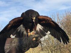 Game App, Birds Of Prey, Bald Eagle, Animals, Image, Animales, Animaux, Animal, Animais