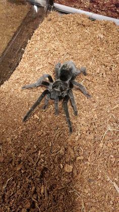 . Spiders, Number, Female, Animals, Animais, Spider, Animales, Animaux, Animal