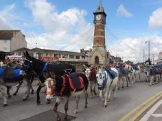 Donkeys on the way to the beach at Skegness by KEN CRAIG, courtesy of ITV Calendar