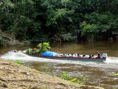 Near Aurora on the Suriname river