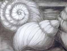 Beginning Drawing: Shell Drawings Graphite Drawings, Drawing Sketches, Art Drawings, Sketching, Shell Drawing, Ocean Drawing, Watercolor Projects, Watercolor Art, Sea Creatures Drawing