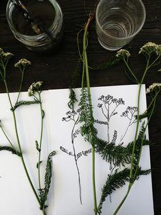 Siankärsämö Art by Ida-Auroora Tervo Instagram @art.sigrid #art #artmoment #moment #visualmoment #drawing #draw #plant #plantdrawing #taide #hetki #taidehetki #kasvipiirustus #piirustus Ant Drawing, Plant, Artwork, Instagram, Work Of Art, Auguste Rodin Artwork, Artworks, Plants, Illustrators