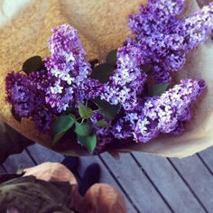 lilacs how i love you so