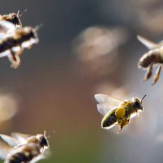 Disappearing bees  http://www.tellwut.com/surveys/current-affairs/news/49235-disappearing-bees.html