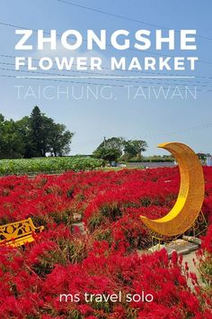 Zhongshe Flower Market has flowers blooming throughout the year which makes the flower farm an excellent day trip from Taichung, Taiwan. Walk around the 6 hectares of flower fields and take photographs around different backdrops in the Taichung flower farm. And don't forget to pin it on your Pinterest travel board! #zhongsheflowermarket #taichungflowerfarm #flowerfarmintaichung #mstravelsolo Taiwan Travel, Asia Travel, Solo Travel, Travel Advice, Travel Guides, Travel Tips, Amazing Destinations, Travel Destinations, Taichung Taiwan