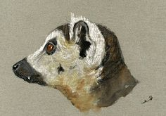 Lemur Primate Madagascar Animal 8x5 Original Art Watercolor Painting Juan Bosco | eBay
