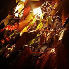 Herbst vor der Haustür - wenn die Natur die Technik überragt Instagram, Autumn, Nature