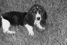 basset baby.. laurie i hope you see this