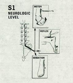 Temecula Chiropractor - Murrieta Chiropractor - Chiropractic Healthcare Provider in Murrieta/Temecula: Good Stuff to Know