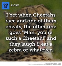 You rotten cheetah!