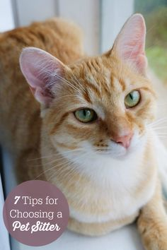 7 Tips For Choosing A Pet Sitter - enjoy your vacation and know your pets are safe and cared for!