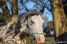 Horse Forest - Download From Over 47 Million High Quality Stock Photos, Images…