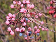 Berries, Berries, Berries by teresa731