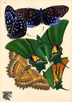 artist, designer and entomologist E.A. Séguy Plate 6