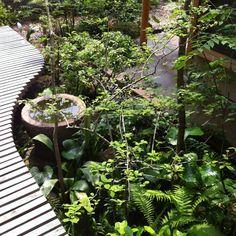Kojisenさんの、植物,棚,のお部屋写真