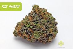 Strain: The Purps