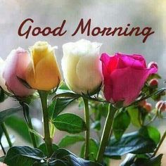 Good Morning greetings Good Morning Snoopy, Good Morning Today, Good Morning My Friend, Good Morning World, Good Morning Sunshine, Tuesday Morning, Good Morning Wishes, Good Morning Greeting Cards, Morning Greetings Quotes