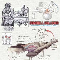 Anatomy of the Dumbbell Pullover https://www.pinterest.com/pin/573646071263596896/ …