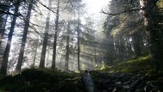 deep forest of Norway
