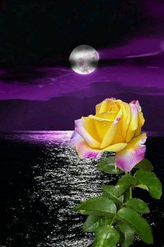 By Artist Unknown. Beautiful Flowers Wallpapers, Beautiful Rose Flowers, Beautiful Moon, Pretty Wallpapers, Good Night Flowers, Rose Flower Wallpaper, Good Night Image, Flower Images, Yellow Roses