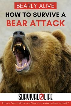 Statistics show that you are more likely to get hit by lighting than attacked by a bear. You might as well be prepared for it, if it does happen. As the saying goes always hope for the best and prepare for the worst. Plus your paracord just might be put to good use. Continue reading so you can have a general idea on how to survive a bear attack. #bearattack #survivalskill #animalattack #survival #preparedness #survivallife Survival Life, Wilderness Survival, Survival Skills, Wild Animals Attack, Animal Attack, Bear Attack, Self Reliance, Money Savers, Diy Camping