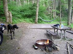 Things to do with your dog in the Smokies: Picnic with your dog in the Smoky Mountains #petfriendly #familyfun