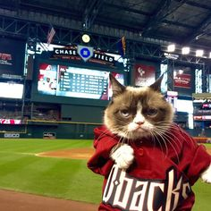 40 minutes until the first pitch. Get your Grumpy @Dbacks meet & greet tickets here: http://www.dbacks.com/grumpy