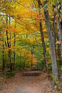 This is a picture I took of Cherokee Park in the fall. It's one of my favorite places to hang out in the fall. The leaves are gorgeous.