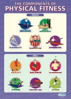 The Components of Physical Fitness | PE Educational School Posters
