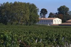 Top Bordeaux wines from the 2005 vintage, currently being reviewed by critics 10 years after the harvest, were among the biggest gainers on the Liv-ex wine market last month and accounted for almost 20 percent of trading.