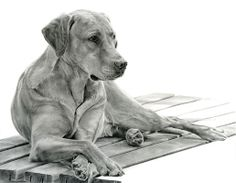 drawing labradors | Animal Art Adventures