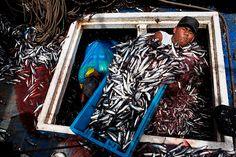 Rodrigo Abd: Marvin Vega unloads a crate of anchovies