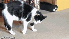funny-gif-cat-rolling-floor