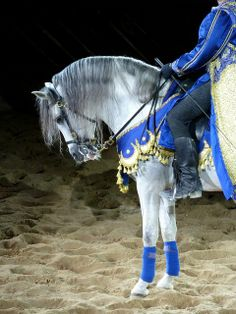Andalusian Horse- Beautiful neck!!  Crossed with a Morgan or Freesian?  You would have an eye-catching Hybrid!!!!