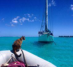 Esta Mujer Dejó Su Trabajo Y Se Fue A Navegar Por El Mundo Con Su Gato