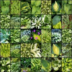 I was looking at hostas and just loved this collection of photos.
