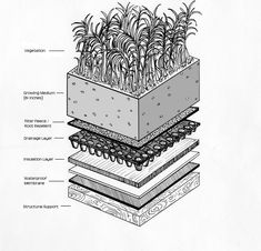 Roof garden design plans: intensive vs extensive green roofs: what's the di Extensive Green Roof, Green Roof System, Casas Containers, Living Roofs, Living Walls, Garden Design Plans, Shed Roof, Roof Detail, Roof Structure