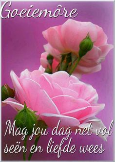 Morning Blessings, Good Morning Wishes, Day Wishes, Beautiful Flowers Pictures, Flower Pictures, Bat Flower, Lekker Dag, Goeie More, Afrikaans Quotes