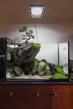 Stunning Aquascape Design Ideas 28