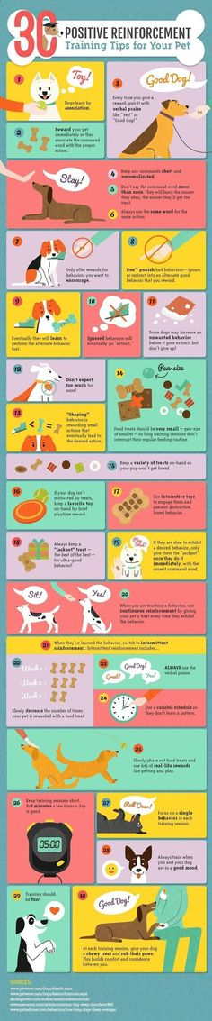 Positive Reinforcement Training for Dogs-Infographic by Amber Kingsley
