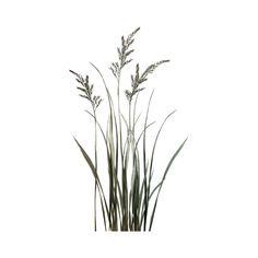 Леди дождя — «морской (81)» на Яндекс.Фотках ❤ liked on Polyvore featuring plants, flowers, greenery and tree