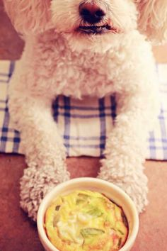 33 Best Homemade Dog Food Recipes that are Natural and Organic. These recipes are Vet Approved and Healthy for your Dog/Puppy. Food Dog, Make Dog Food, Best Homemade Dog Food, Dog Treat Recipes, Healthy Dog Treats, Baby Food Recipes, Pet Treats, Dog Diet, Crockpot