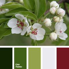 Color Palette  #2817